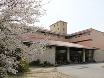 正面玄関 桜