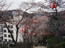 みゆき山公園の桜