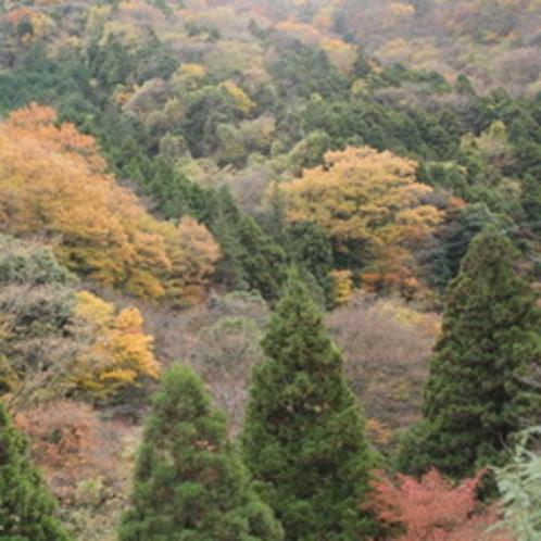 美しい秋色に染まる箱根の山々。秋だけの姿をぜひご覧ください。