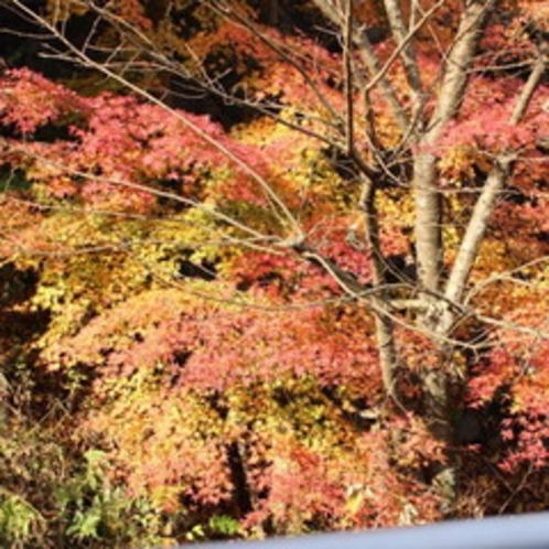 鮮やかな赤が目を引く箱根の紅葉。