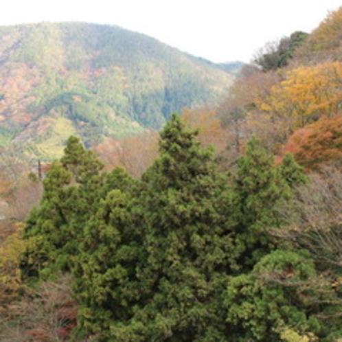 秋には鮮やかな木々が辺りを囲みます
