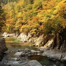 ◆【馬瀬川の紅葉】馬瀬川に沿ってドライブがおすすめ