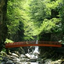 ◆【滝見遊歩道】滝見遊歩道を歩いてリフレッシュ