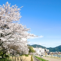 ◆【下呂温泉街河川敷の桜】