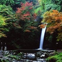 ◆【横谷峡四つの滝「白滝」】オオサンショウウオの飼育池がある