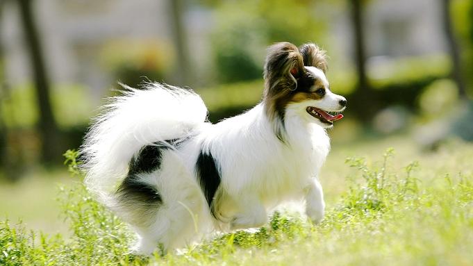 【 ペット同室OK 】大型犬〜猫、小動物まで可♪スタンダード2食付ペットプラン