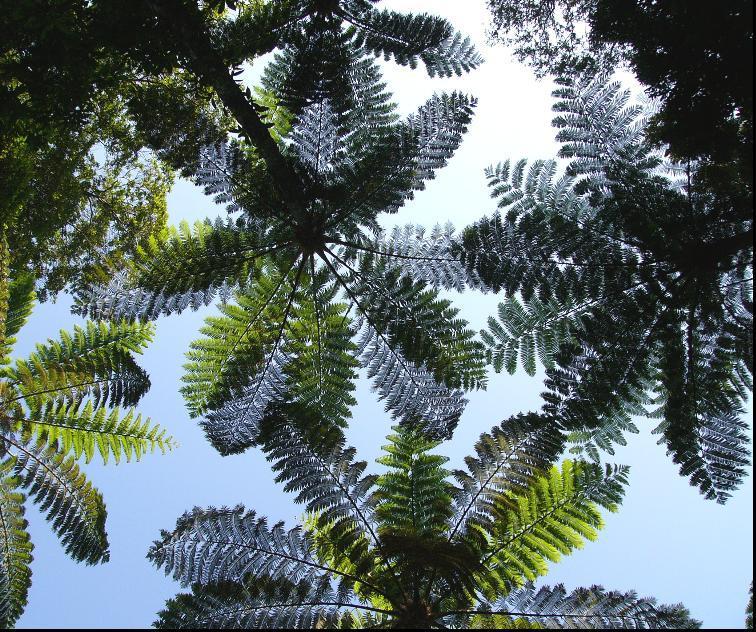 亜熱帯の森 金作原