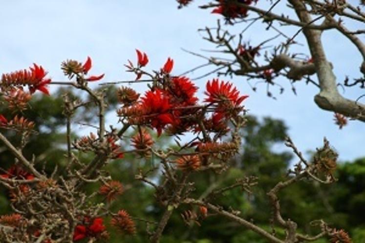 四季折々の花々も