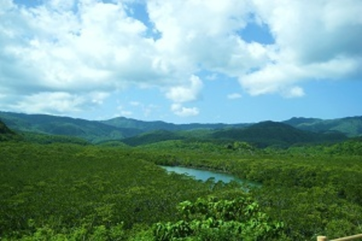 西表島の広大なマングローブは、