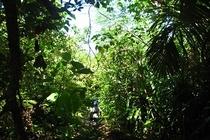 ジャングルを冒険したり、