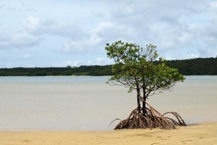 強くたくましい島の大地を感じて下さい。
