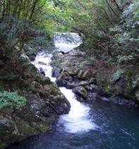 奄美大島の川です