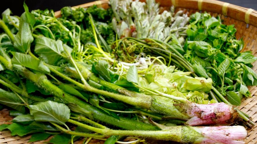 【山菜】天然物の山菜にこだわっています。実際に山で採った旬の山菜は、新鮮そのもの!
