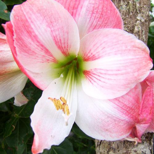 1年中色とりどりの花が咲いています。