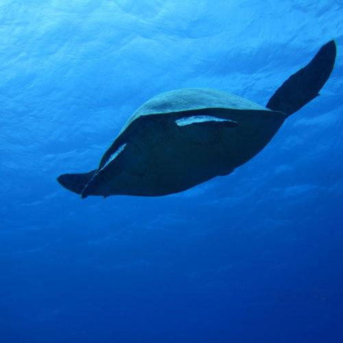 紺碧の海と珊瑚礁、東洋の真珠と呼ばれています。