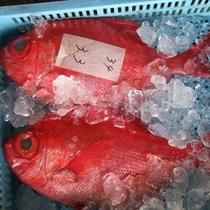 魚市場!新鮮な魚がいっぱい♪
