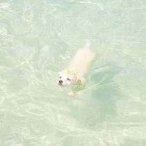 大金久海岸で泳ぐワンコ♪キレイな海で泳ぐのは気持ちいいみたいです