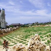 台風時に倒壊した箇所に、芝生を張って広場が完成☆お手伝いいただいたお客様、ありがとうございました♪