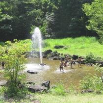 【流れの遊び場】安全に水遊びが楽しめます