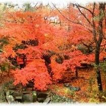 秋の紅葉谷