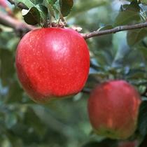 信州の旬の果物など産地直送で手に入るスポットも近くにあります。