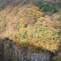 *【小原渓谷】例年の見頃は、10月下旬〜11月上旬です。