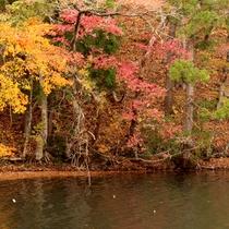 *【長老湖】紅葉時期には、赤・黄・緑のコントラストを見ることも出来ます。【当館から車で約30分】