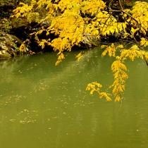 *【小原渓谷】落葉が渓流に流れる様子を眺めながら、遊歩道を散策。【当館から車で約10分】