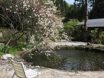庭の池と花桃
