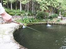 庭の池でニジマス・イワナ釣り