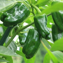 数多くの野菜を栽培しています
