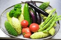 自家製の無農薬野菜