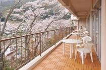テラス 桜