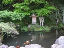 初夏のかくばん池