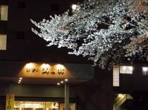 外観+桜満開
