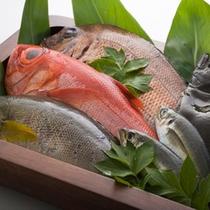 【料理】選べる地魚