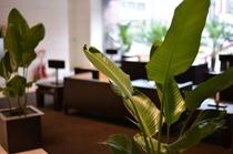 ロビー_観葉植物