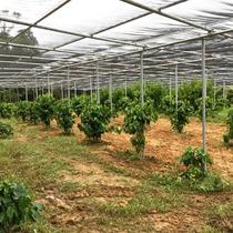*園内のコーヒーハウスでは2年後の出荷を目指してコーヒーを無農薬栽培をしております!