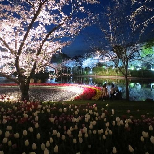 はままつフラワーパーク夜桜とチューリップ