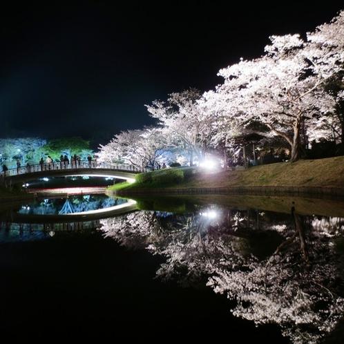 はままつフラワーパーク水面に映える夜桜