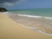 ホテル前のビーチは、毎年亀の産卵場所となっています。