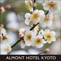 京都御苑の白梅