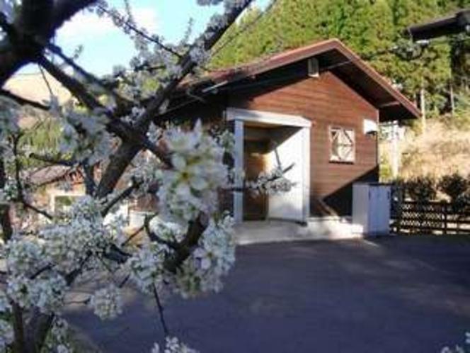 4. 桜もうすぐ満開です3月22日