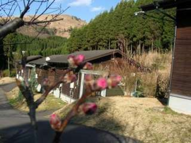 3. かわいい桃花の蕾3月22日