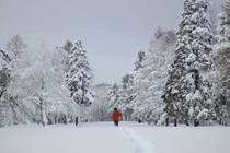 一面真っ白の冬景色です!