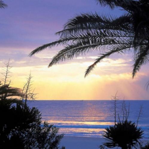 *【下田入田浜】海岸沿いのソテツの並木に南国ムードが漂うビーチ