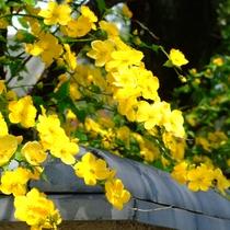 *当館のお庭では季節の花々がお客様をお迎えいたします。
