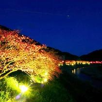 *みなみの桜と菜の花まつり・ライトアップ