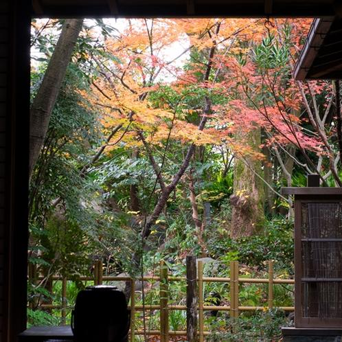 *秋はお部屋から・お風呂から・燃えるような紅葉が目を楽しませてくれます