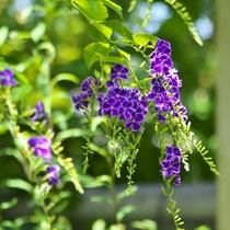 *当館では色鮮やかな花々が季節ごとにお楽しみいただけます。